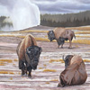 Old Faithful Bison Group