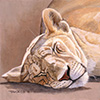 Sleeping Lion 2